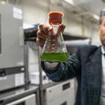 Mazda forscht an Biokraftstoff aus Mikroalgen